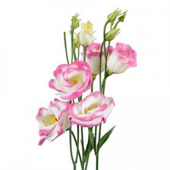 Эустома розовая - 1 шт.