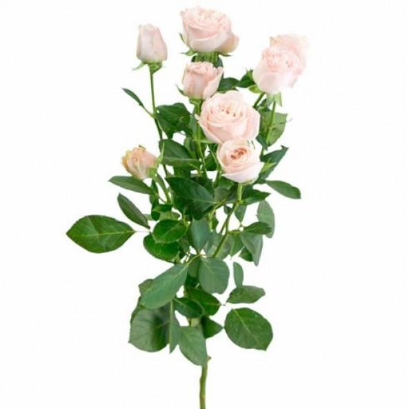 Кустовая роза (розовая) - 1 шт.